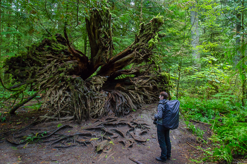 Cathedral Grove, Vancouver Island, Kanada