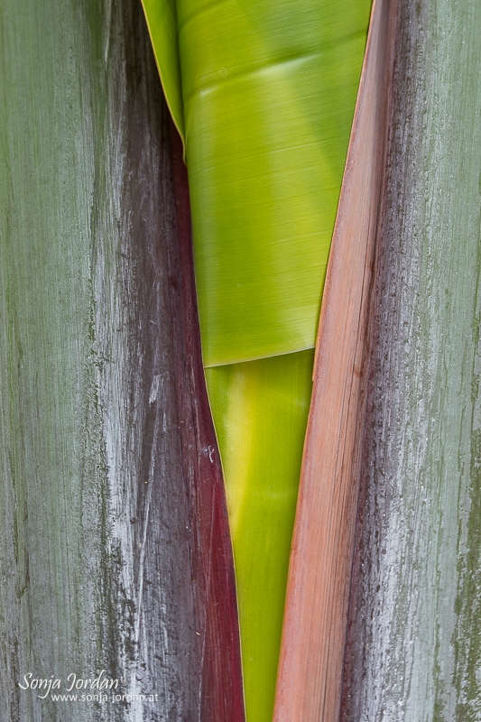 Palme, Stamm, Detailaufnahme