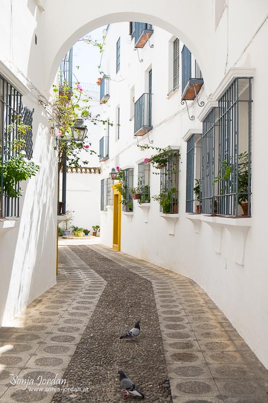 typische Gasse, Altstadt, Cordoba, Andalusien, Spanien