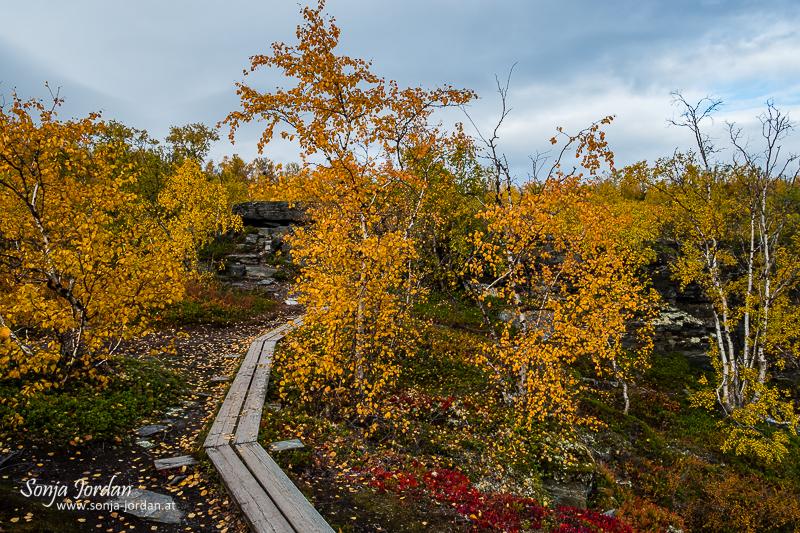Wanderweg, Herbstlicher Abisko Nationalpark, Norrbotten, Lappland, Schweden