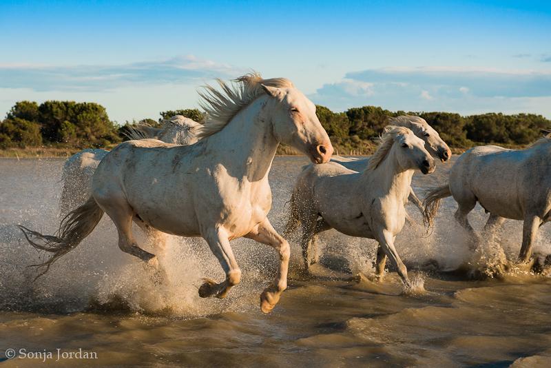 Das Land der weißen Pferde