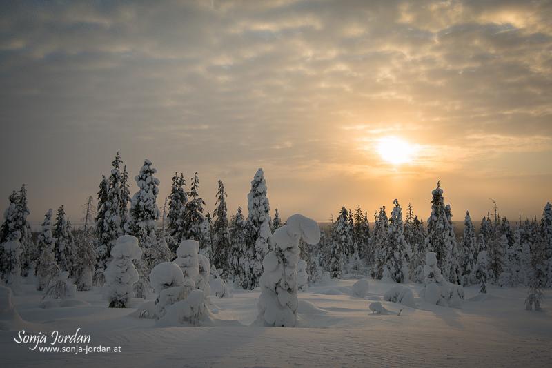 Traumlandschaft im Winter