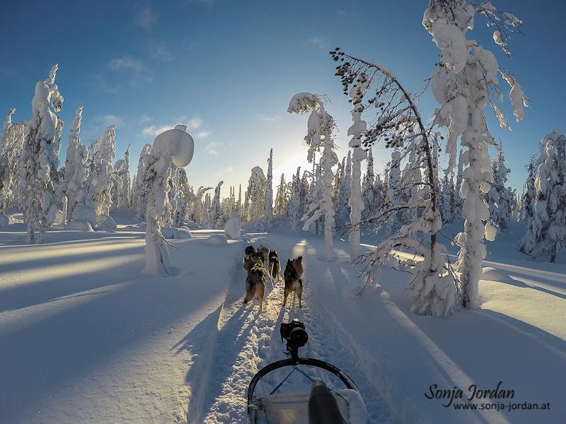 Unterwegs in Finnlands Wildnis