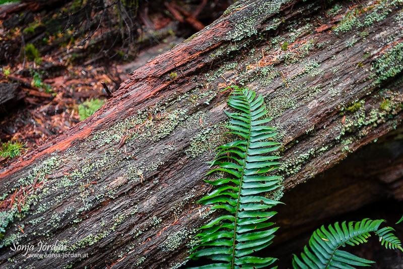 Vancouver Island und seine Regenwälder
