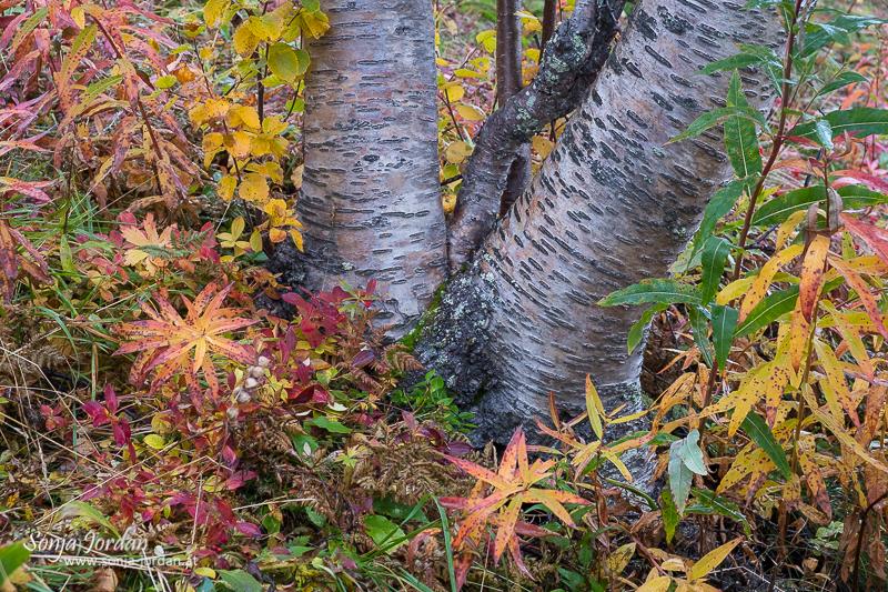 Grüße aus Schwedisch-Lappland
