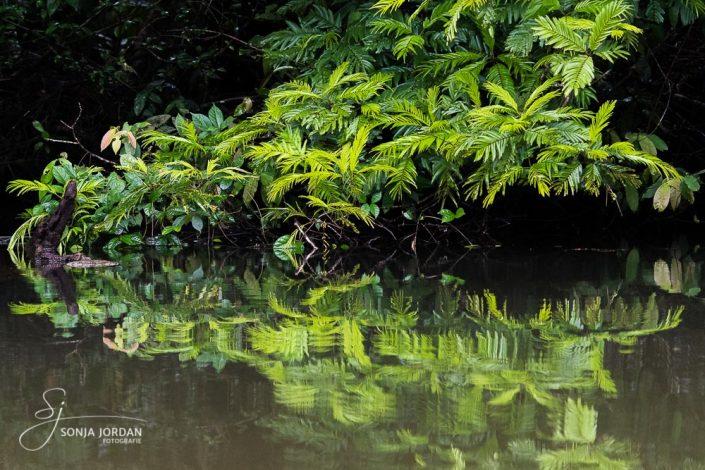 Tortuguero Nationalpark