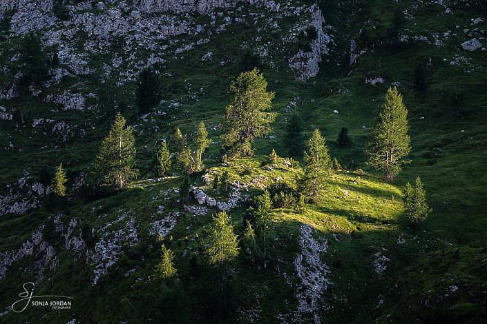 Felsige Bergwiese im Abendlicht