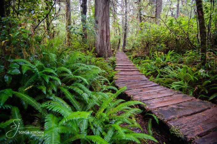Pacific Rim Nationalpark