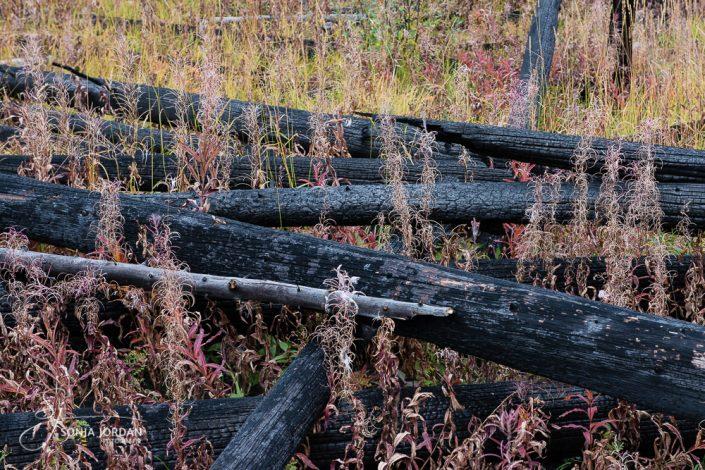 Sawback Range