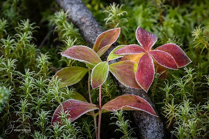 Herbstliche Bodenvegetation