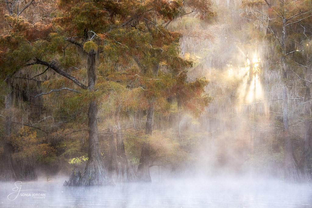 Die Sonne durchbricht den Nebel.