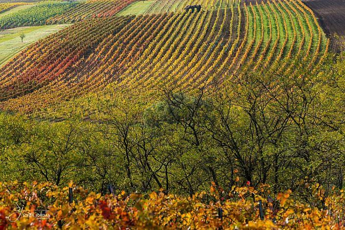 Weinviertel